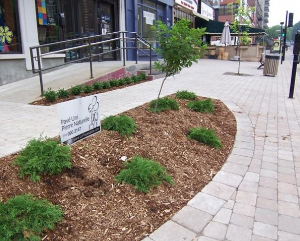 Commercial lanscaping in Montreal - Monkland NDG Montreal