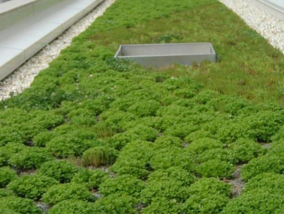 toit vert sur membrane TPO -