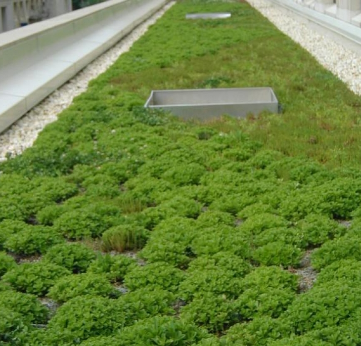 green roof on TPO membrane. -