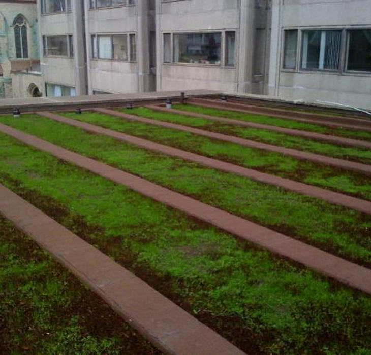 Intensive green roof Montréal - 60 cm of culture soil for large calibre trees